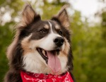 Birmingham Pet Photographer 5